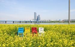 5월 13일~14일까지 반포한강공원 서래섬에서 `2017년 한강 서래섬 유채꽃 축제`가 열린다.