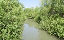 습지 곳곳 우거진 버드나무는 맹그로브 숲을 연상시킨다. ⓒ박분