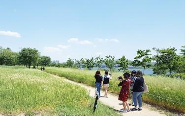 시민들이 백색보리밭에서 기념사진 촬영에 한창이다. ⓒ최용수