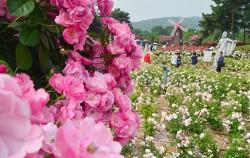 서울대공원 `장미원축제` (5월 27일~6월 11일) ⓒ뉴시스