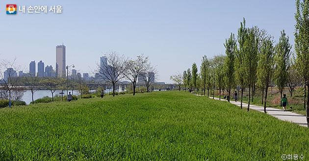 오색보리밭과 가로수길이 강 건너 풍경과 어우러지며 멋진 조망을 연출한다. ⓒ최용수