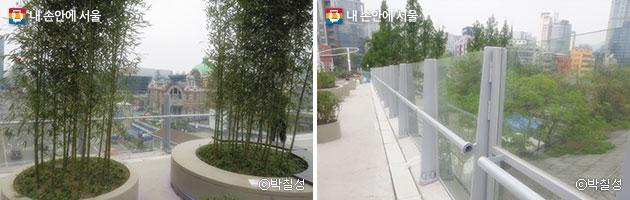 원형 화분에 이식된 나무(좌), 위험 알림 난간(우) ⓒ박칠성