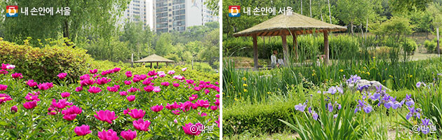 작약이 만발한 약용식물원(좌), 곳곳에 위치한 원두막(우) ⓒ박분