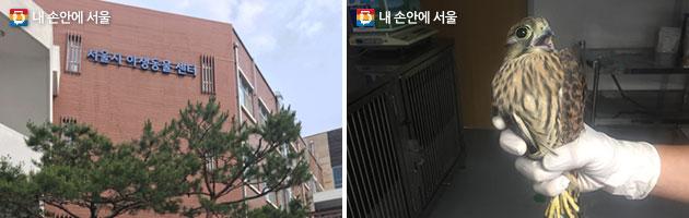 서울시 야생동물센터 전경과 구조된 황조롱이
