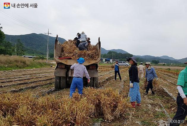 참가들이 수확한 마늘을 트럭에 싣고 있다. ⓒ이성식