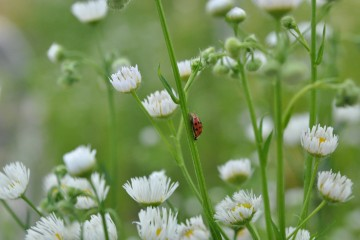 자연을 지키는 무당벌레