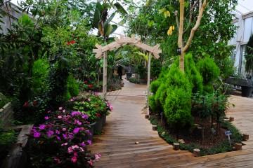 푸른수목원 식물원의 여름