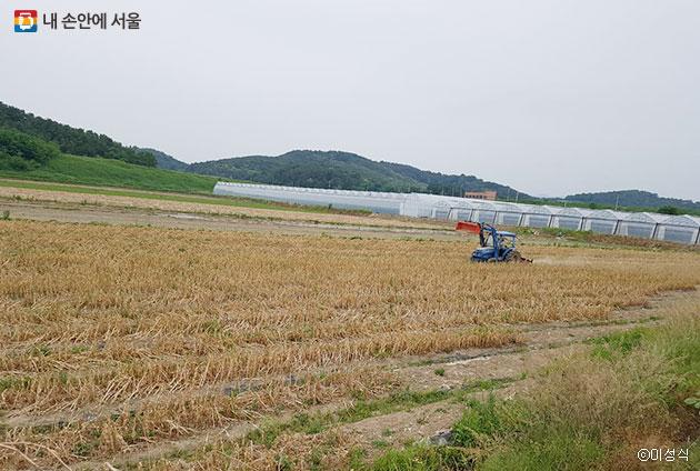 일손을 도와 마늘 수확을 진행할 1,500평 마늘밭 ⓒ이성식