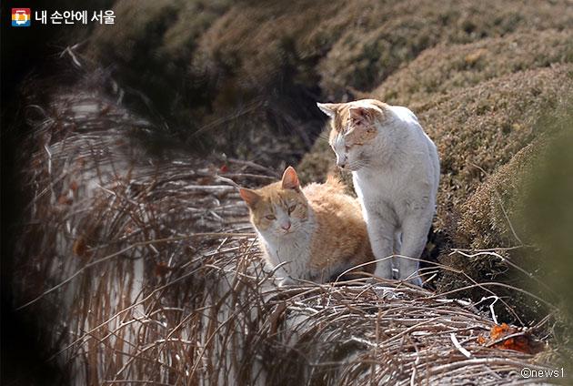 서울시는 32개 길고양이 급식소를 운영 중(2017.6.21.기준)이다