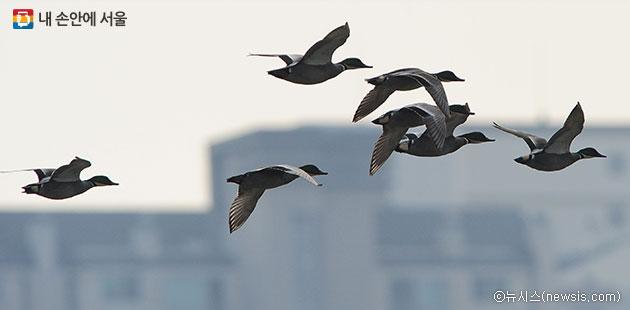 한강을 날아가는 새들. 서울에서 구조되는 야생동물 중 80%가 조류이다.ⓒ뉴시스