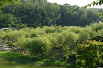 북서울꿈의숲…녹음방초