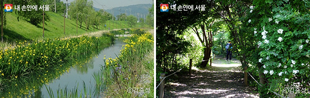 고덕수변생태공원 옆에 이어져 있는 고덕천(좌), 짙은 그늘과 하얀 찔레꽃 향이 좋은 숲 속 길(우) ⓒ김종성