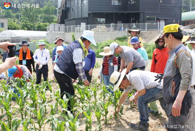서울시농업기술센터에서는 도시농부 교육뿐만 아니라 다양한 귀농,귀촌 교육과 체험 등을 실시하고 있다.ⓒ서울시농업기술센터