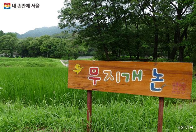 도봉초등학교 생태교육 체험 학습장 `무지개 논`ⓒ김영옥