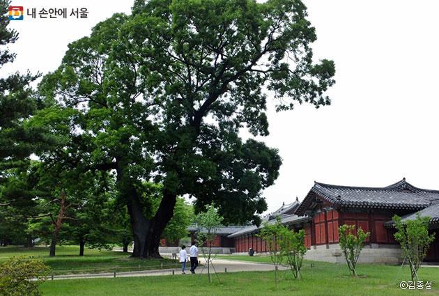 나무가 드리운 풍성한 그늘 아래 맑은 공기를 맡으며 걷기 좋은 고궁 ⓒ김종성