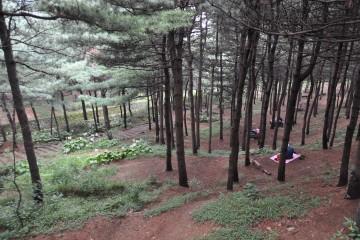 서울둘레길 5구간의 숲속 쉼터