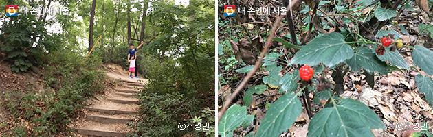 초안산 주변 산책길(좌), 산책 중 발결한 산딸기(우)  ⓒ조영안