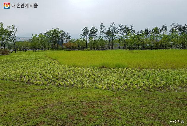 잘 단장된 잔디공원에 수목과 지피초화류 식물들이 식재돼 있다.ⓒ조시승