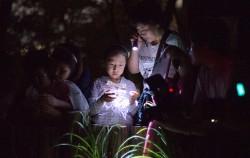 월드컵공원 `1일 나들이` 반딧불이 해설 및 암실 체험ⓒnews1
