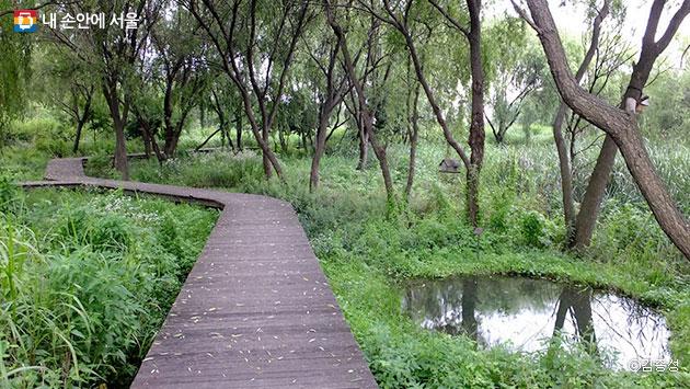울창한 숲속을 거니는 기분이 드는 난지생태습지원 탐방로 ⓒ김종성