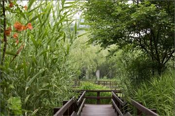서울숲 습지원 수변생태공원