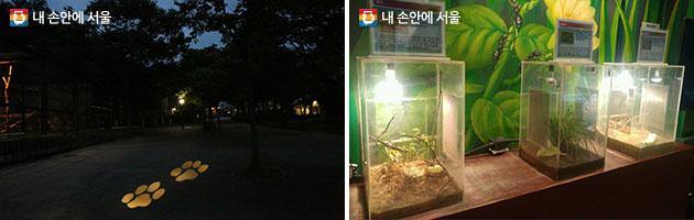호랑이사로 이어진 발바닥 조명(좌), 벌레잡는 모습을 관찰할 수 있는 생태박스(우)