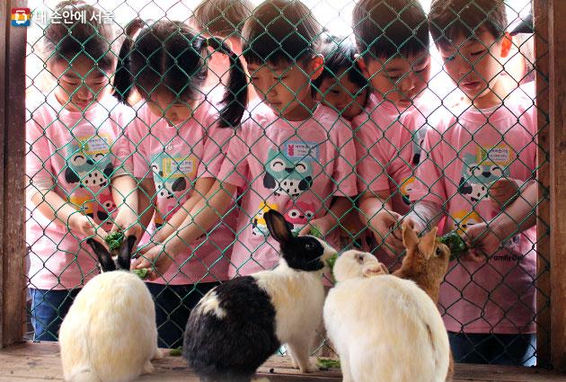 도심 아이들이 친환경 농촌생활을 체험하는 `힐링농업체험`