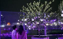 무궁화나무에 달린 메시지를 읽고 있는 연인 ⓒ김윤경
