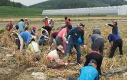 서울시50플러스가 50플러스 세대의 귀농귀촌을 도와주는 농부인턴십 프로그램을 준비했다.
