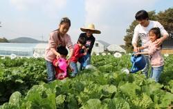 텃밭에서 채소를 가꾸고 있는 가족