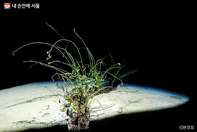 자연광을 끌어올 수 있는 기술을 이용해 지하에서도 식물을 키울 수 있다. 도시의 지하 공간 활용에 대한 아이디어를 제시하고 있다. ⓒ변경희