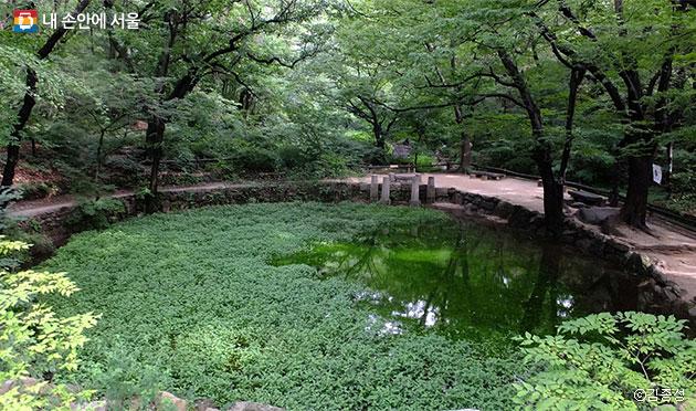많은 수생식물과 곤충, 동물들이 사는 백사실 계곡 큰 연못 ⓒ김종성