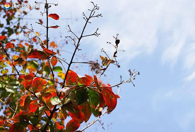 가을이 오는 소리