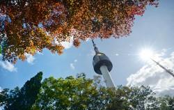 가을 타는 당신을 위한 '남산 활용법'