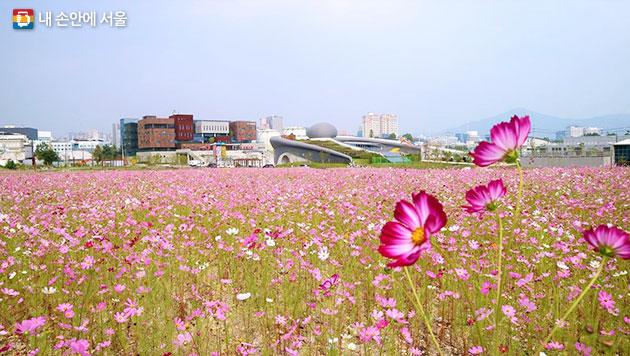 서울시는 중랑·난지·서남·탄천 물재생센터를 시민들이 가을맞이 나들이를 즐길 수 있는 공간으로 조성하고 개방하였다
