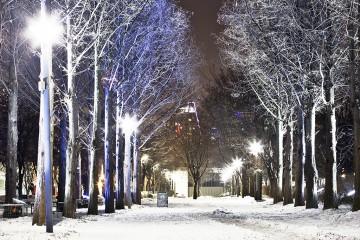 서울 겨울명소 서울숲 하얀 나무