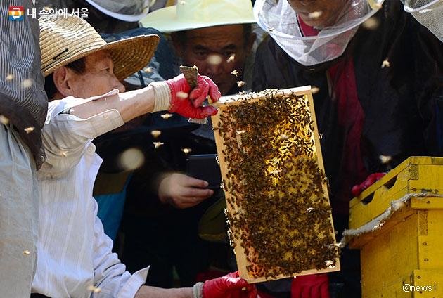 서울 강동구 양봉학교에서 꿀 따는 모습ⓒnews1