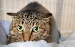 서울시는 올해 9,700마리 길고양이를 중성화시킬 계획이다.