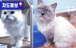 사람과 동물이 모두 행복한 서울 유기견‧유기묘 입양하고 싶다면 반려동물 키우고 싶다면