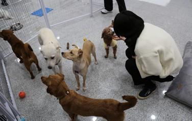 서울동물복지지원센터에서 유기견 입양 행사가 열렸다. 입양을 기다리고 있는 강아지들.