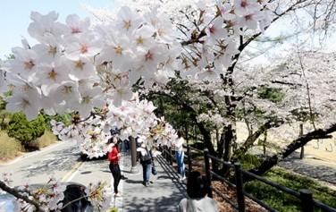 서울시는 '서울의 아름다운 봄 꽃길 180선'을 발표했다
