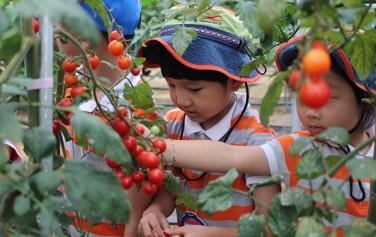 힐링체험농장 토마토 수확 체험