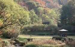 서울대공원 금붕어광장 내 연못