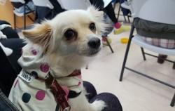 서울반려동물교육센터를 찾은 한 시민의 반려견 보라