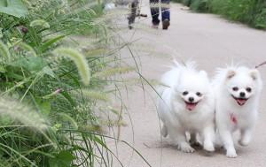 산책 중인 강아지