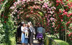 서울장미축제를 찾은 가족 관람객들이 5.15km 장미터널에서 사진을 찍고 있다