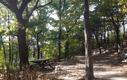 우거진 나무 사이로 오솔길을 만들어 산책로를 조성한 개운산