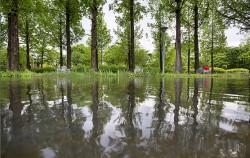서울숲 거울연못 수면에 비친 메타세콰이어 숲의 모습을 활용해 사진을 찍어보았다.