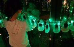 반딧불이 체험관, 자신의 소원을 적은 반딧불이 카드를 걸고 있는 어린이