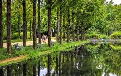 물이 있어 시원한 녹음길 - 서울숲